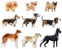 Dog Breeds Icon Set Royalty Free Stock Photos