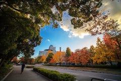 Colored Japanese maple leaf (Osaca castle) Stock Photo