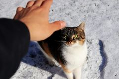 A colored kitten looking my hand and waiting what will be happen Royalty Free Stock Image