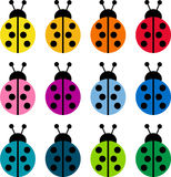 Colored ladybirds Stock Images