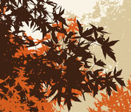 Colored landscape of automn brown foliage Stock Photography