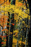 Colored leaf patterns in the Smokies. Stock Photo