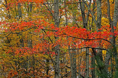 Colored leaf patterns in the Smokies. Royalty Free Stock Images