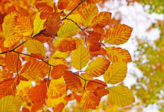 Colored leaves. In a forest in autumn Royalty Free Stock Images