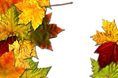 Colored leaves. Stock Photos