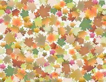 Colored leaves. Autumn fall background with colored leaves stock photography