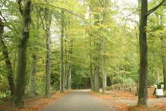 Colored leaves by autumn on trees along a road in Nunspeet on the Veluwe in the Netherlands. Colored leaves by autumn on trees along a road in Nunspeet on the stock images
