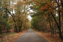 Colored leaves by autumn on trees along a road in Nunspeet on the Veluwe in the Netherlands. Colored leaves by autumn on trees along a road in Nunspeet on the stock image