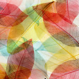 Colored leaves background Royalty Free Stock Photo