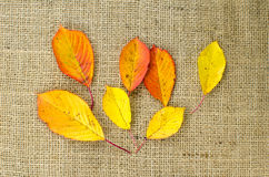Colored leaves at burlap Royalty Free Stock Images