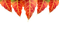 Colored leaves on a card Stock Photos