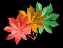 Colored leaves Stock Photography