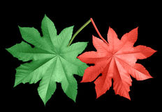 Colored leaves Stock Image