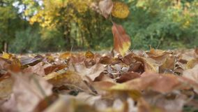 Autumn colored leaves falling in slow motion stock video