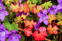 Colored leaves & flowers Royalty Free Stock Photos