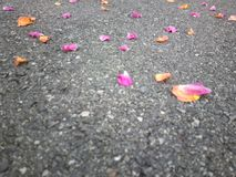 Colored leaves on the ground. From a different perspective everything seems nicer Royalty Free Stock Photography