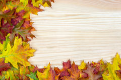 Colored leaves lie on a wood background with copy space. Various colored leaves lie on a wood background with copy space royalty free stock photography