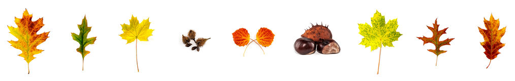 Colored leaves lying side by side on white background Stock Photos