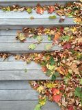 Colored leaves on stairs Stock Photography