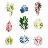 Colored leaves stamps variants Stock Image