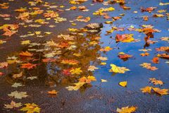 Colored leaves on wet pavement Stock Photos