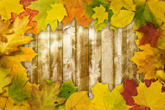 Colored leaves on wooden board Royalty Free Stock Photos