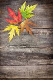 Colored leaves on wooden board Royalty Free Stock Photography