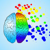 Colored left brain and right brain. Concept. Stock Images