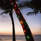 Colored lights on palm tree. Royalty Free Stock Photography
