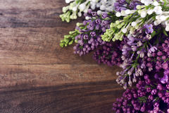 Colored lilacs Royalty Free Stock Image