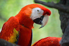 Colored Macaw Stock Images