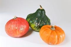 Colored mini pumpkins. Mini pumpkins in several colors Stock Photos