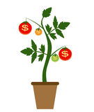 Colored Money Tree, Dependence of Financial Growth Flat Concept. Vector Illustration. EPS10 Stock Images