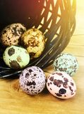 Colored mottled eggs. Of a quail  in the basket Stock Photo