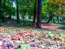 Colored nature, beautiful season Royalty Free Stock Image