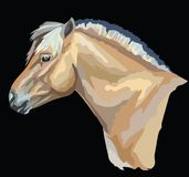 Colored Norwegian fjord pony. Colored portrait of  Norwegian fjord pony. Horse head with long mane in profile isolated vector illustration on black background Stock Photo