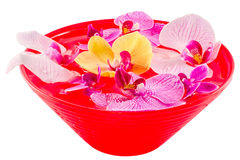 Colored orchid flowers, mauve, pink, purple in a red bowl with water Royalty Free Stock Photos