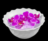 Colored orchid flowers, mauve, pink, purple in a white bowl with water Stock Image