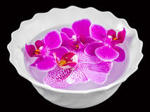 Colored orchid flowers, mauve, pink, purple in a white bowl with water Royalty Free Stock Image
