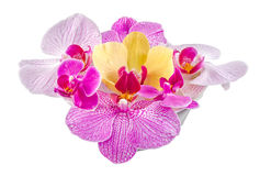 Colored orchid flowers, mauve, yellow, pink, purple, Orhideea Phalaenopsis Stock Photography