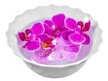 Colored orchid flowers, mauve, yellow, pink, purple, Orhideea Phalaenopsis Royalty Free Stock Image