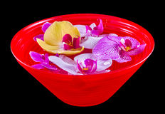 Colored orchid flowers, mauve, yellow, pink, purple in a red bowl with water Stock Images