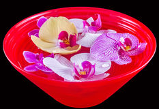 Colored orchid flowers, mauve, yellow, pink, purple in a red bowl with water Royalty Free Stock Images