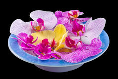Colored orchid flowers, mauve, yellow, pink, purple in a white-blue tray Royalty Free Stock Image