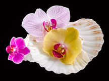 Colored orchid flowers and sea shells Royalty Free Stock Photography