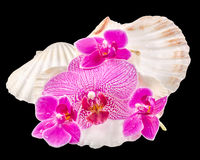 Colored orchid flowers and sea shells Stock Photo