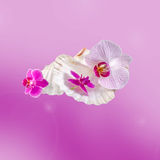 Colored orchids flowers with sea shells, pink texture degradee background, close up. Stock Image