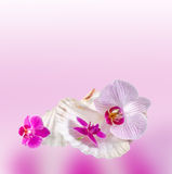 Colored orchids flowers with sea shells, pink texture degradee background, close up. Royalty Free Stock Photography