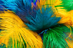 Colored ostrich feather Royalty Free Stock Image