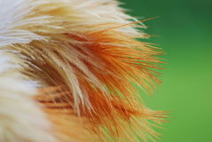 Colored Ostrich Feather duster bouquet Stock Photography